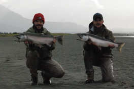 A pair of nice Silver Salmon